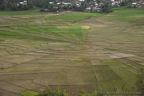 Spiderweb Rice Fields Cancar